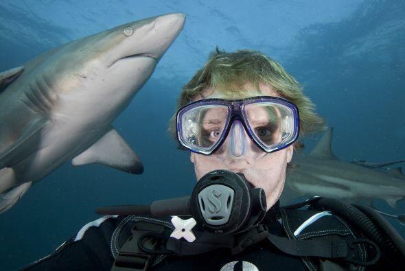 Mientras Aaron tomaba las fotografías, un tiburón mordi&oa...