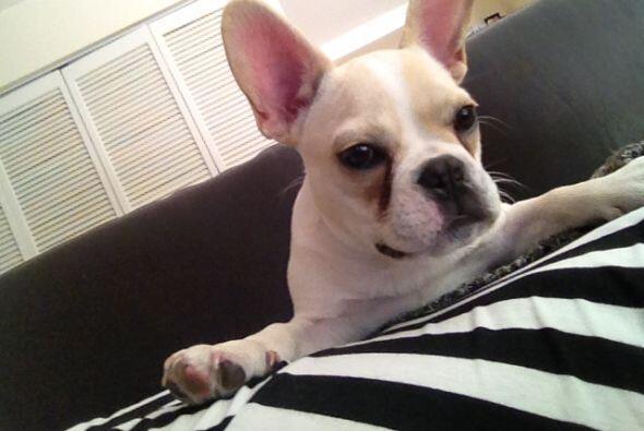 Le encanta ver televisión, es muy juguetón y algunas veces ronca mientra...