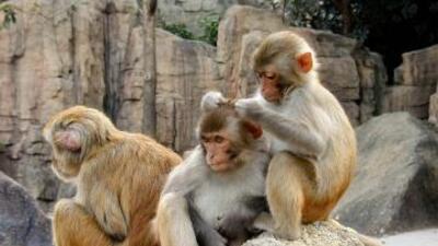 Dejan escapar a decenas de monos infectados