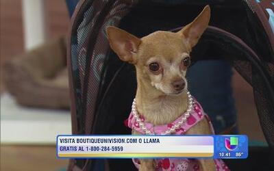 Ana Patricia y Ximena  te dicen donde comprar todo para tu mascota.
