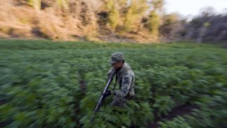 El gobierno de México enfrenta una batalla en contra del narcotráfico.