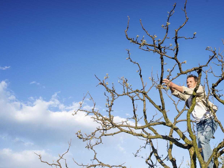 Muchas ciudades podan los árboles de manera indiscriminada y sin...