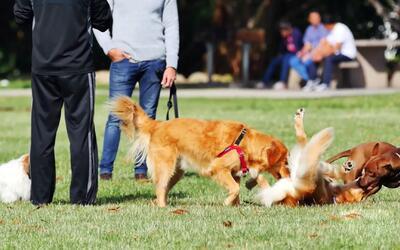 Trucos para que tu mascota se porte bien en el parque