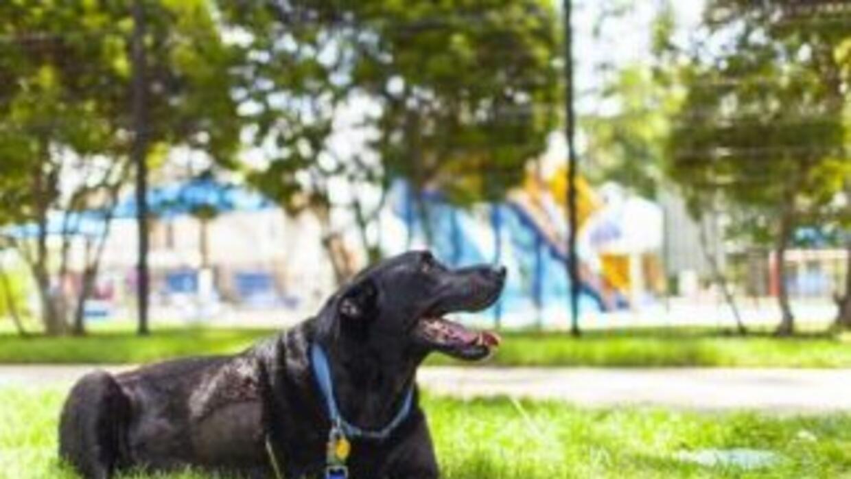 Duke en uno de los días más felices de su vida. Fotografía tomada de Twi...