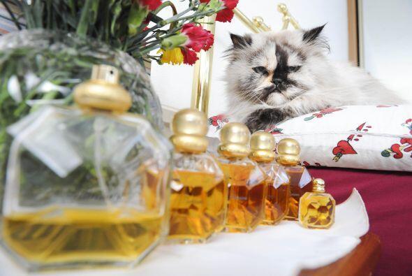 Además esta gatita es adicta a una fragancia muy costosa que ya sólo se...