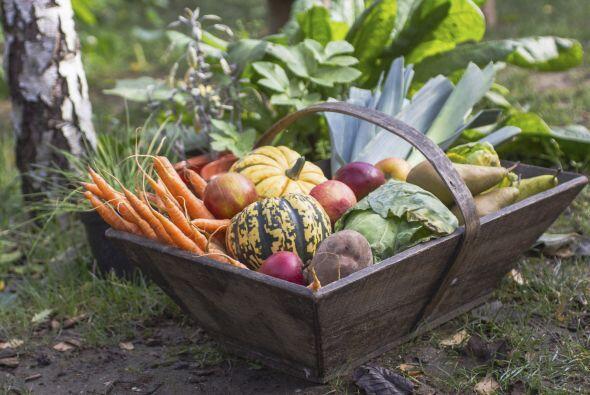 Verduras: remolacha, col de Bruselas, repollo, col rizada, apio, puerro,...
