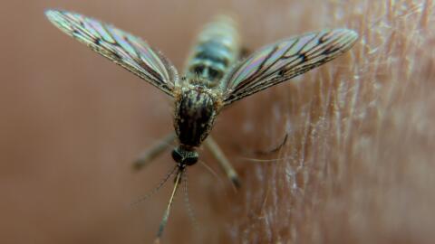 Los mosquitos no respetan fronteras, de ahí la importancia de que la luc...