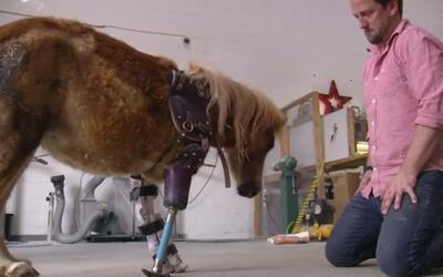 """Derrick Campana, el """"Doctor Dolittle"""" que ayuda a que los animales vuelv..."""