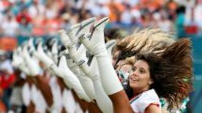 Dolphin Cheerleaders
