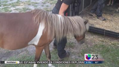 Rescatan animales en condiciones deplorables en Davie