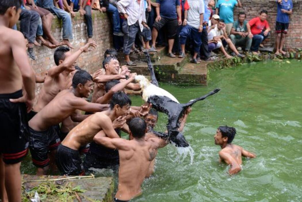 Nepaleses se aferran a una cabra en un antiguo ritual anual festival hin...