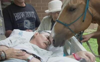Hispano muere luego que le permitieran ver sus caballos