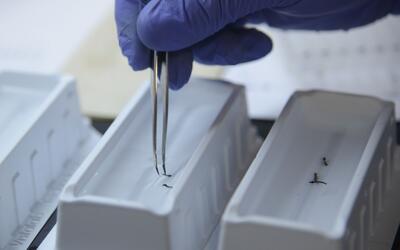 Los CDC buscan averiguar más acerca del contagio del zika por sexo.