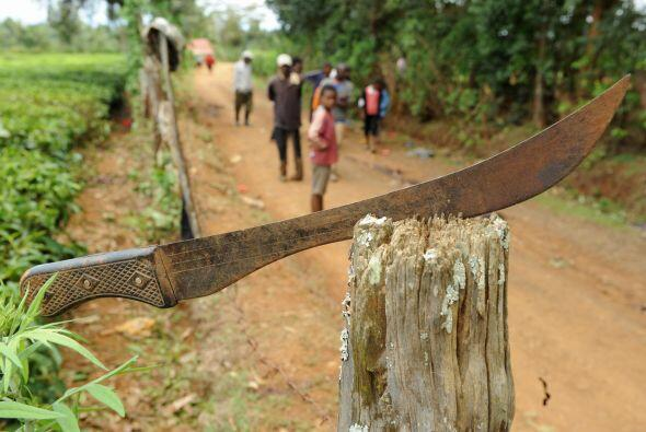 Por la creciente demanda, un buen impermeable o un machete de la serie t...