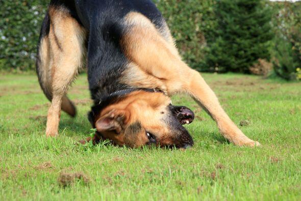 Mascotas 'out'. Si algún niño insiste en traer a su perro, aclárale que...