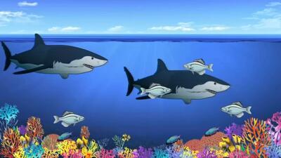 ¿Qué pasa cuando desaparecen los tiburones?