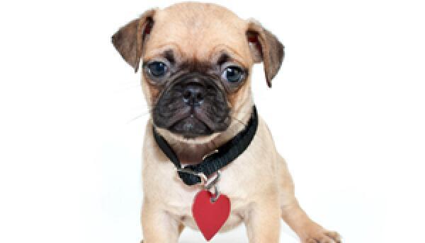 Asegúrate de que tus mascotas tengan su placa de permiso
