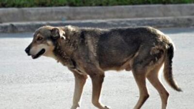 El perrito lleva cino años esperando que su amo vuelva.