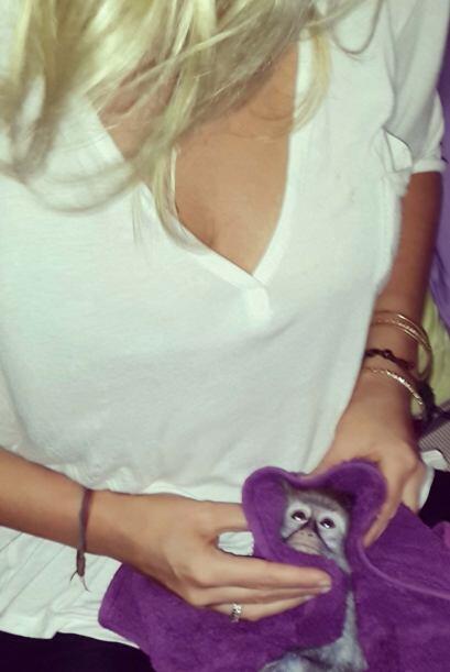 Brittany llevó con ella al, casi recién nacido, mono para...