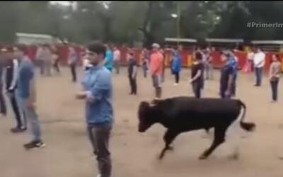 Un video muestra el grado de pasividad en los toros