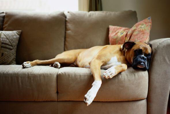 Con estos 'tips' seguro consigues que tu perro sea el mejor del vecindario.