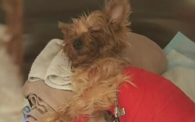 Libre bajo fianza el hombre acusado de golpear y matar a una mascota en...