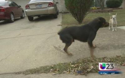 23 en Acción: Perros callejeros en Dallas