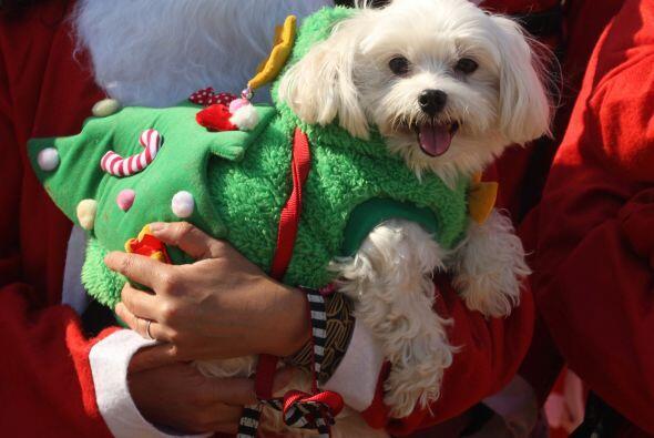 4. Sacaría a pasear a tu mascota y hasta le regalaría el atuendo navideñ...