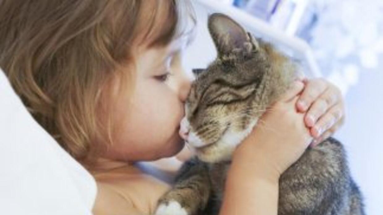 Una mascota puede dejarle grandes enseñanzas a tu niño. Eso sí: debes se...