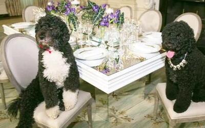Los perros de la Casa Blanca la pasan muy bien en la mansión presidencial