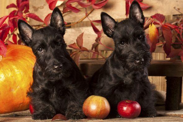 En general, a los perros les encantan las frutas, siempre y cuando desde...