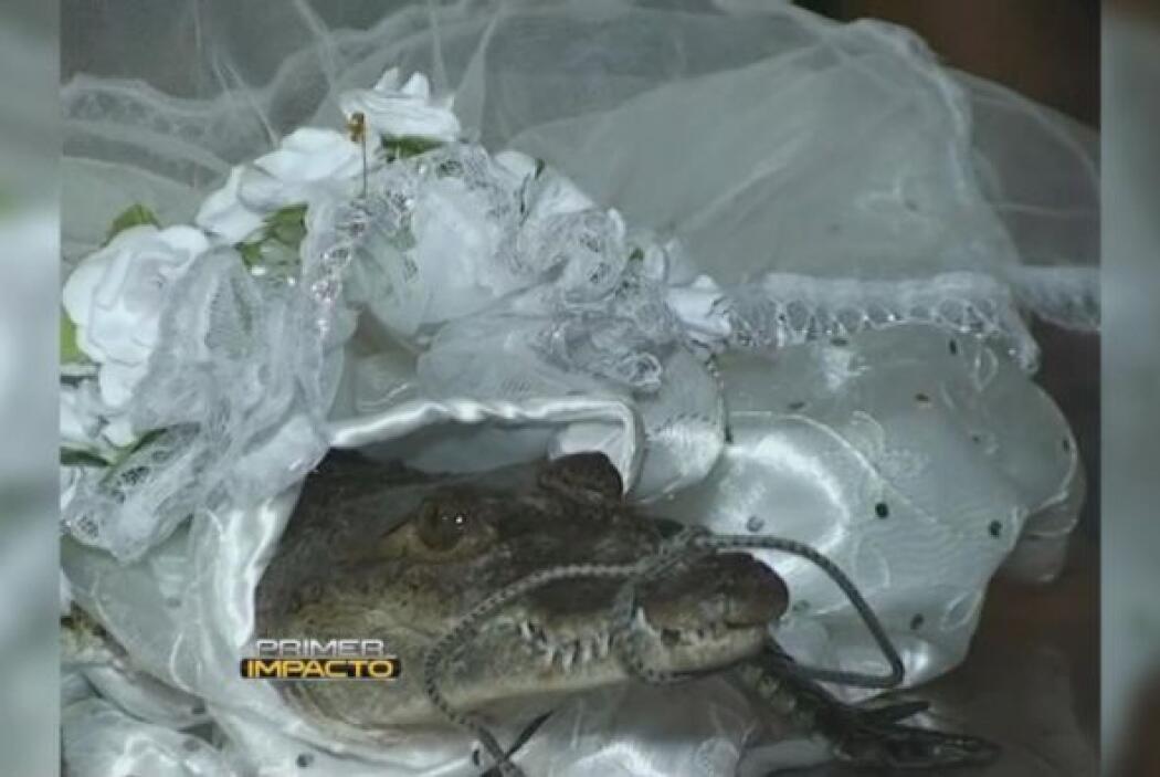 Una vez constatada la castidad de la nueva esposa se entregan flores com...