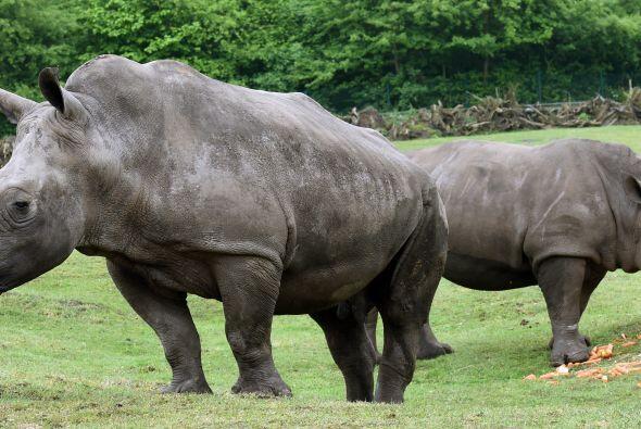 El pasado 7 de mayo en el zoológico Sergenti en Alemania decidieron casa...