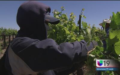Empresarios agrícolas expresan su desacuerdo al aumento salarial