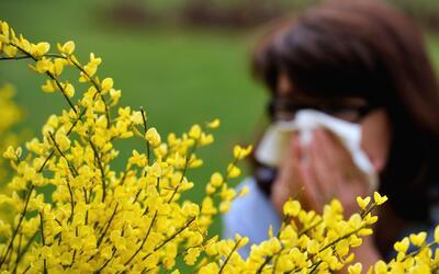 Primavera, temporada de molestias para las personas que padecen alergias