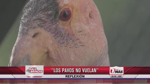 Reflexión: Los pavos no vuelan