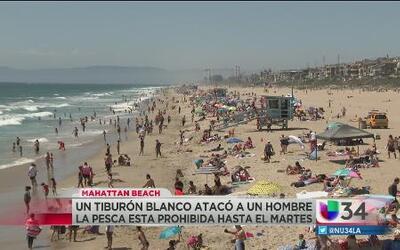 Prohíben nadar varias horas en Manhattan Beach por tiburón blanco