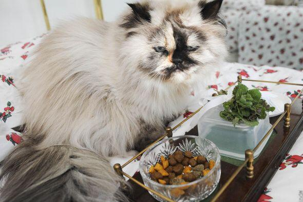 Para empezar, ella no se alimenta si no llevan su comida en una fina ban...