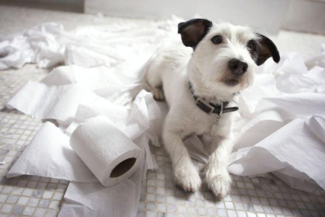 Uno de los puntos más importantes al momento de elegir una mascota, es p...