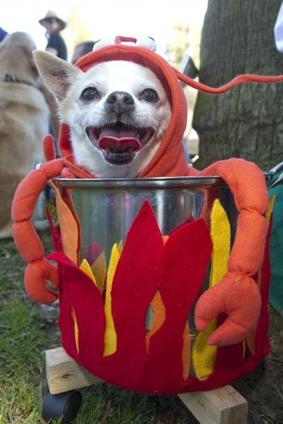 ¿Se te antoja una langosta? Carga a tu perrito en una olla decorada mien...