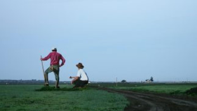 Entre los cultivos cuya cosecha es sensitiva, debido a que la fecha exac...