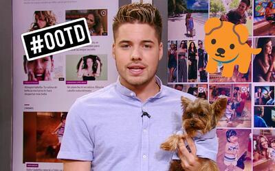 William y Tobi se vinieron vestidos iguales en la Semana de las Mascotas