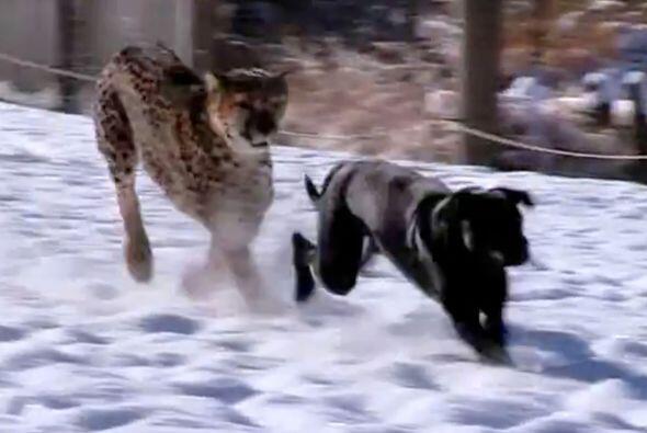 Y, con el invierno, llegó la nieve. Ambos amigos no dudaron en di...