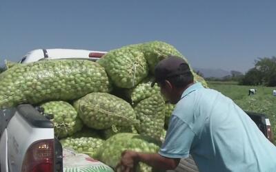 56 campesinos mexicanos fueron incorporados por una empresa estadouniden...