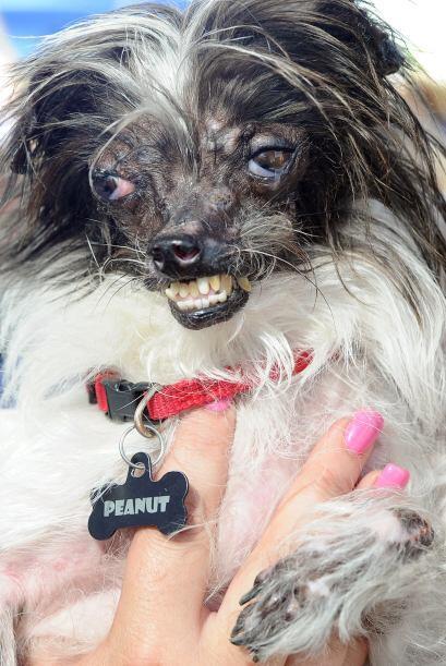 El ganador de este año fue un perro callejero de dos años de edad llamad...