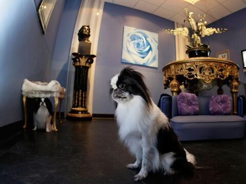 Los amantes de las mascotas han creado el concepto 'pet friendly', para...