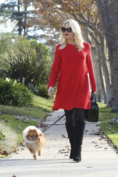 ¡Dicen que algunas mascotas se parecen a sus dueños! Gwen Stefani y su m...