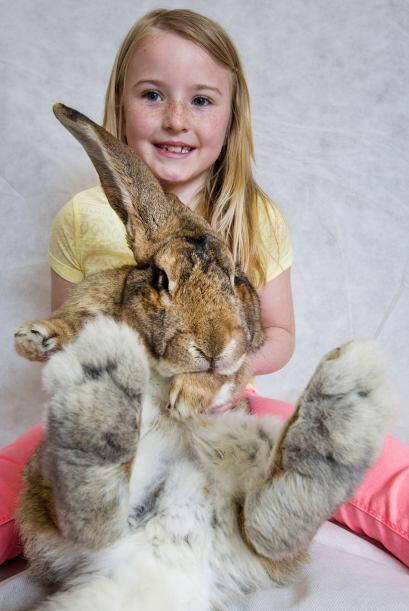¡Estos conejos deben escuchar a muchos pies de distancia!