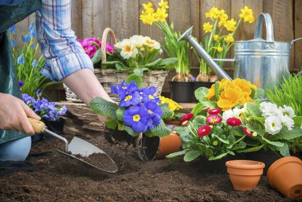 Trabajar en el jardín. Si amas tus plantas y pasas varias horas p...