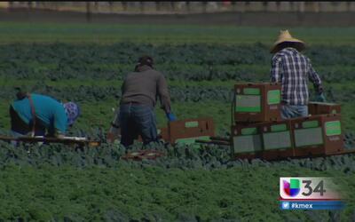 Empleados agrícolas de California denuncian salarios injustos